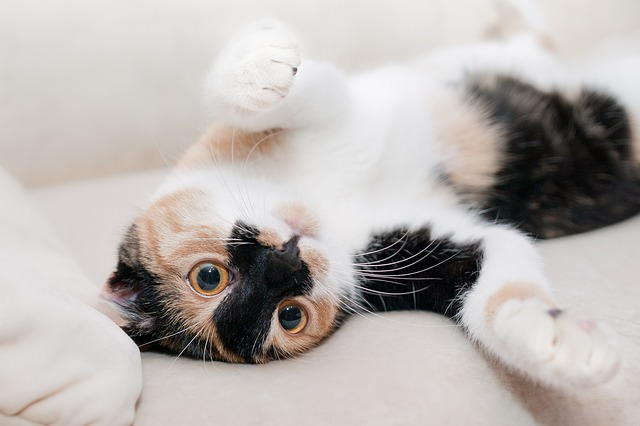 9 Reasons Why Your Cat Keeps Meowing At You Cute cats