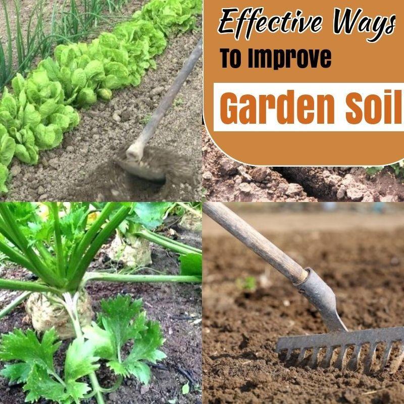 de1a32ad7bbda37316e1fdf87c7276a5 - How To Prepare Soil For Next Year Gardening