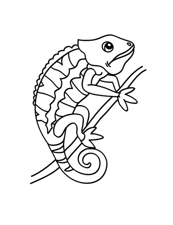 Chameleon Changing Color Coloring Pages Best Place To Color Chameleon Changing Color Animal Coloring Pages Coloring Pages