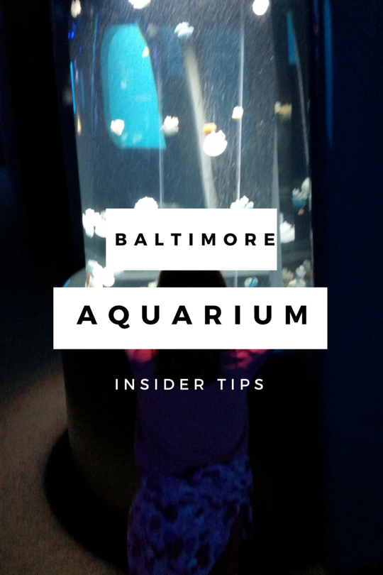 Baltimore Aquarium Tips that Will Save Your Sanity ...