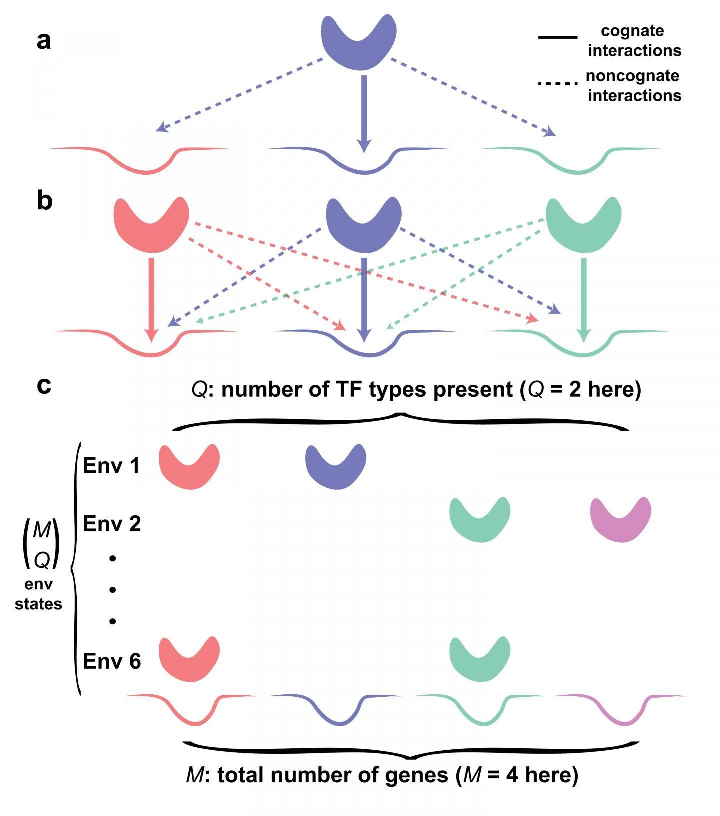 Global Crosstalk Limits Gene Regulation