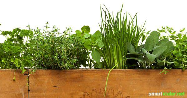 kr uter im blumenkasten so wird jeder balkon zum kr utergarten gardening pinterest. Black Bedroom Furniture Sets. Home Design Ideas