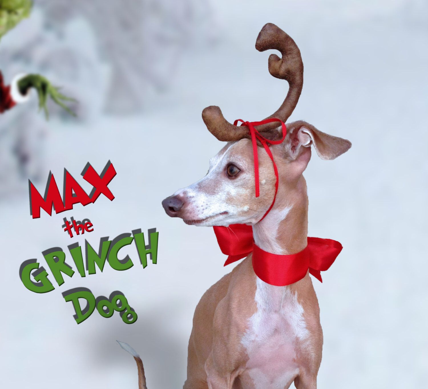 Max the Grinch Dog head antler for Christmas pets, dog or
