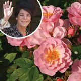 Recently introduced, the 'Carefree Caroline' rose was inspired by Princess Caroline, daughter of the late actress Grace Kelly, Princess of Monaco (who also has her own namesake rose). Coral-orange blooms with  yellow  centers appear from late  spring  through  fall  on this compact plant. | HGTV FrontDoor