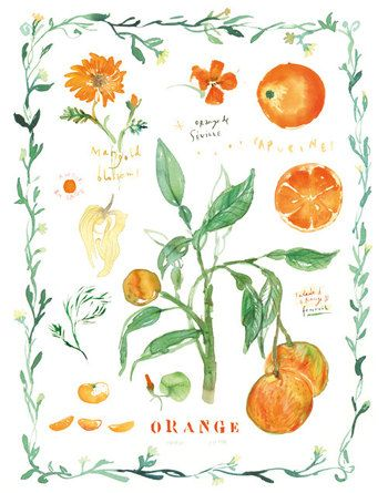 Print Of Orange Fruits And Flowers With By Lucileskitchen On Etsy 2500