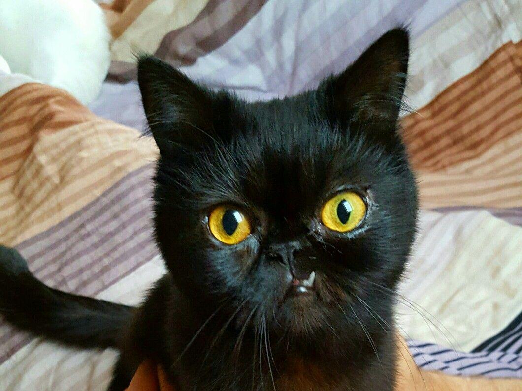 Sweet Ugly Black Cat