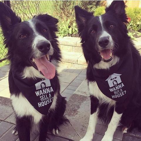 Dog Bandana Wanna Sell A House Dog Bandanna Real Estate