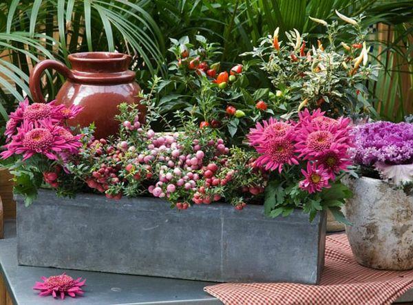 Choisir une plante pour jardini re quelques id es et for Composition florale exterieur hiver