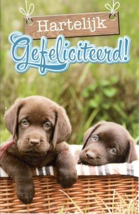 gefeliciteerd dieren Hartelijk gefeliciteerd Felicitatiekaarten met hondjes   puppies  gefeliciteerd dieren