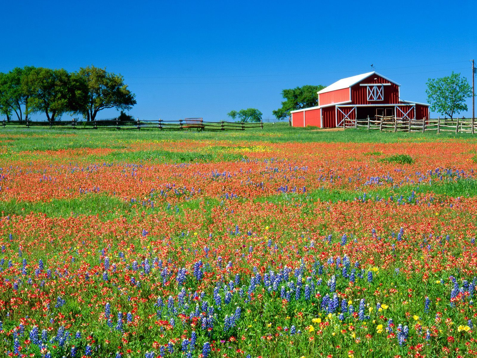 Home Barn, Big red barn, Wild flowers