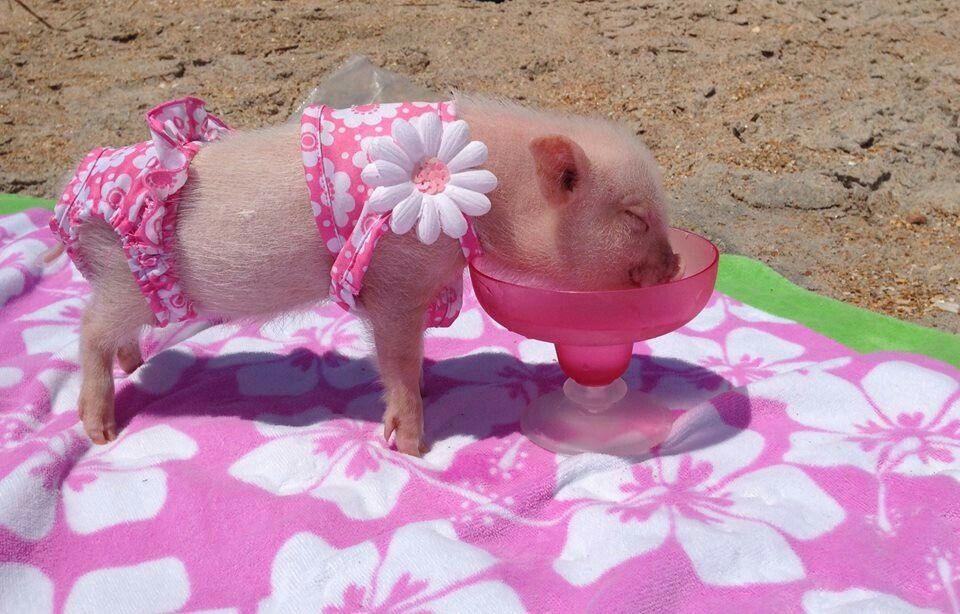 Cute Little Piggy♡♡♡