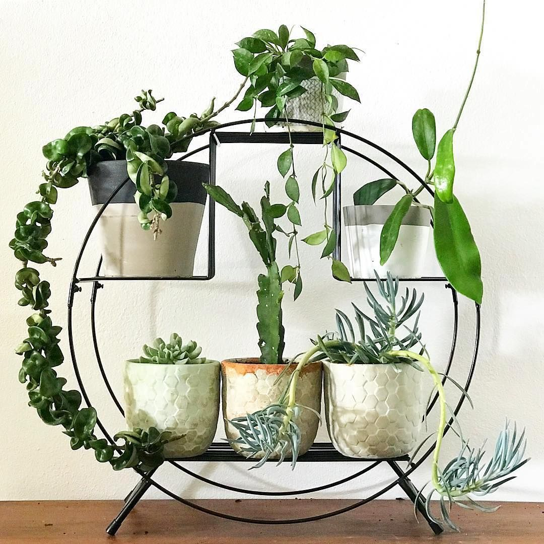 instagram decoracion hogar pinterest plantas