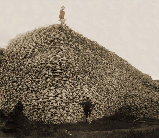 18 Completely Unsettling Historical Photos - Bison skulls soon to be ground into fertilizer, 1870s. How sad, so many bison killed, mostly for 'sport'.