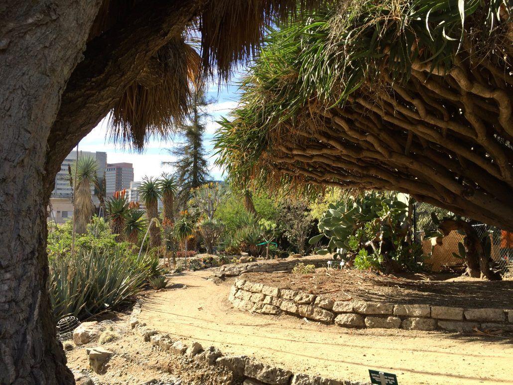 The Mildred E Mathias Botanical Garden At Ucla Includes Plants