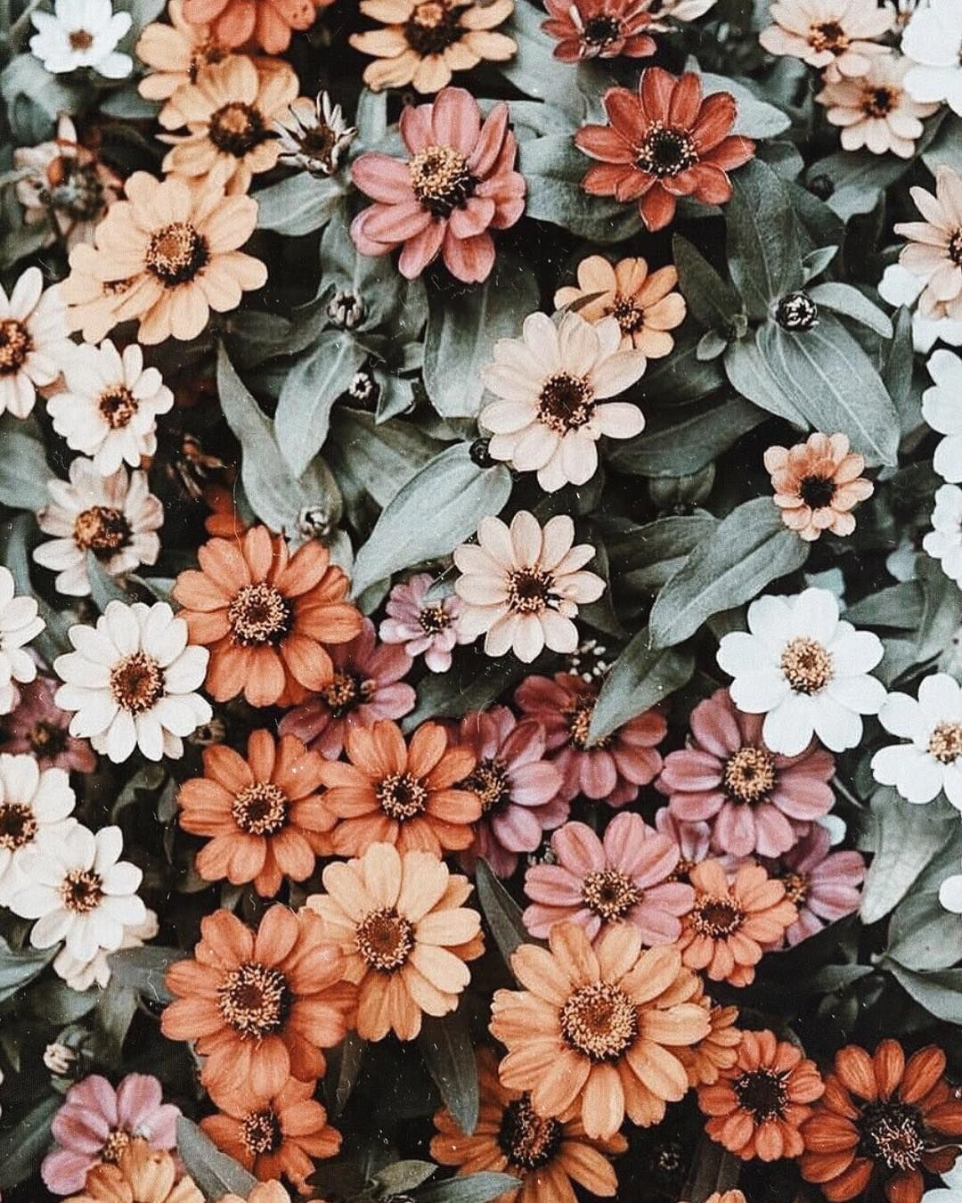 Aesthetic Flower Background Pinterest