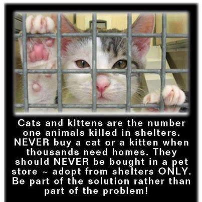 Adopt Dont Shop Cats Animals Kittens
