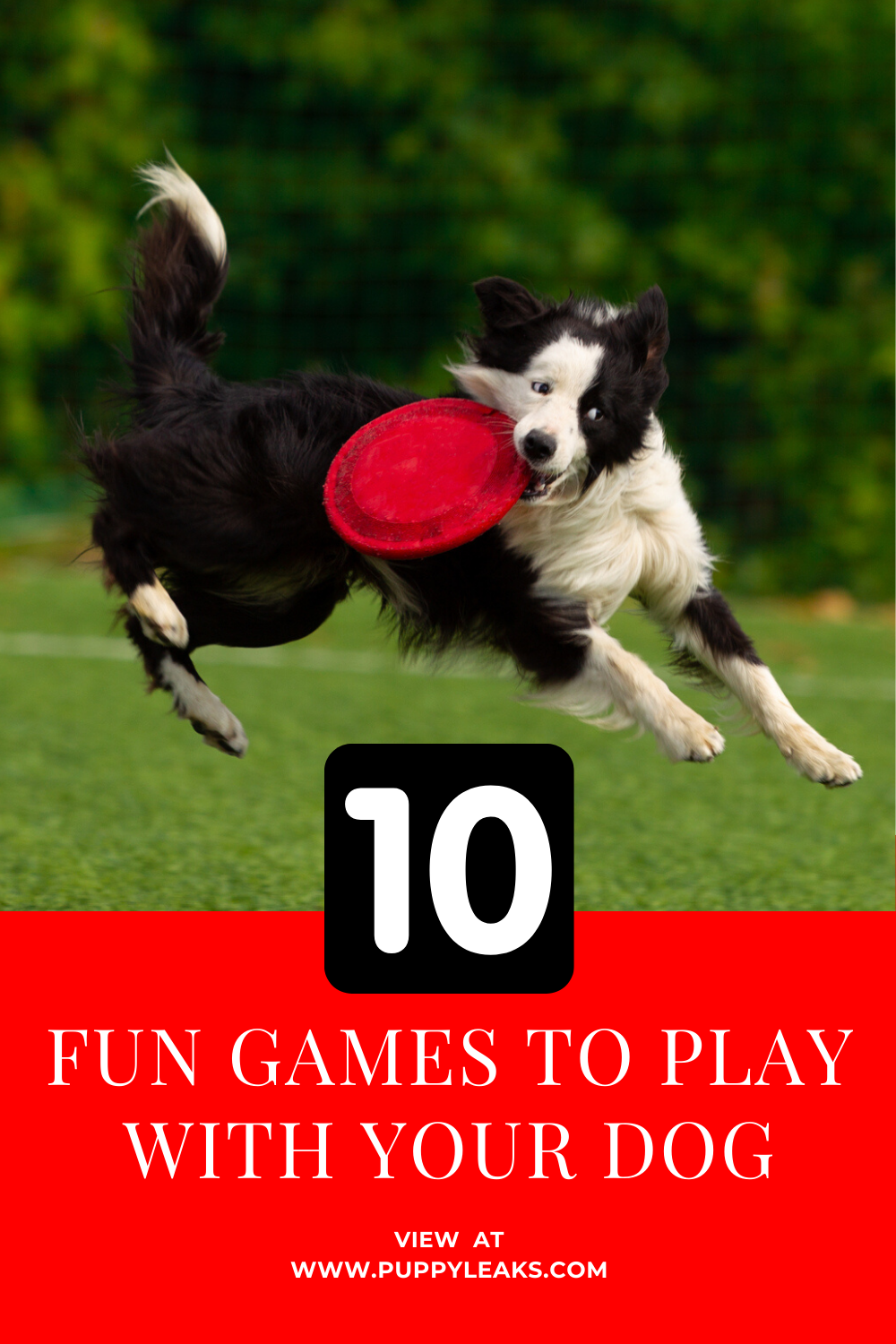 10 Fun Games to Play With Your Dog in 2020 (With images