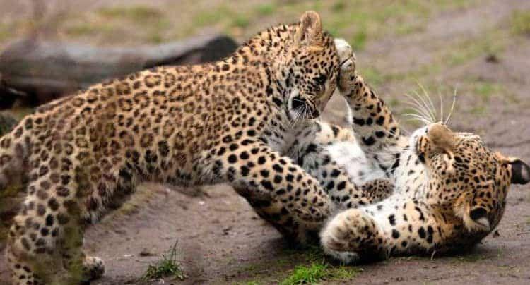 Tierpark Nordhorn Gutschein 2 Fur 1 Coupon Ticket Mit Rabatt In 2020 Tierpark Tiere Zoologischer Garten