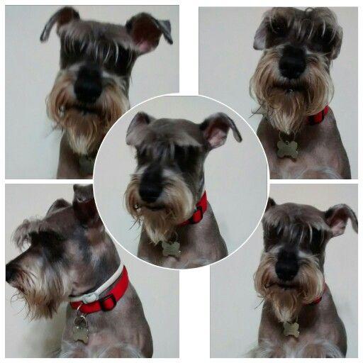 """Mascota """"mussito""""  6 años"""