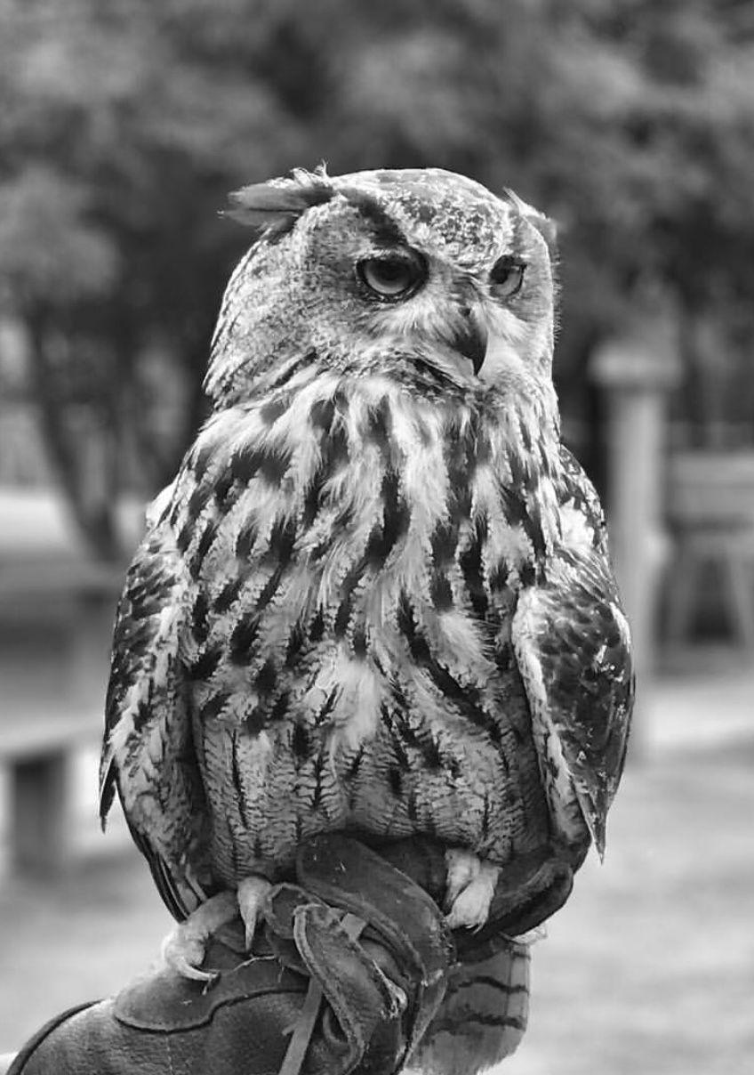 Black and white owl hogwarts aesthetic wizarding world of harry