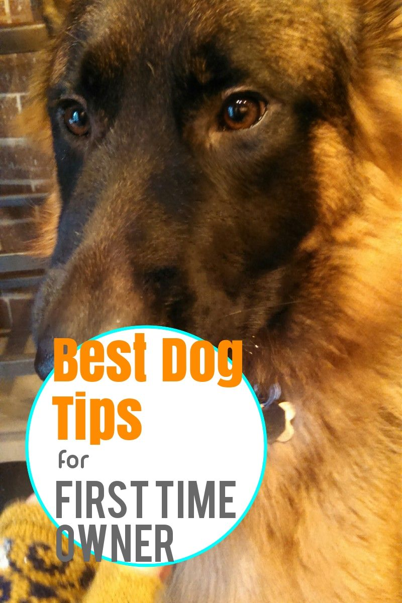 Treat Your Pet Right With These Dog Care Tips Dogs Dog Care