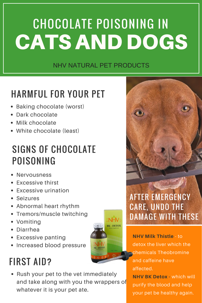Chocolate poisoning in cats and dogs - What are the signs and what ...