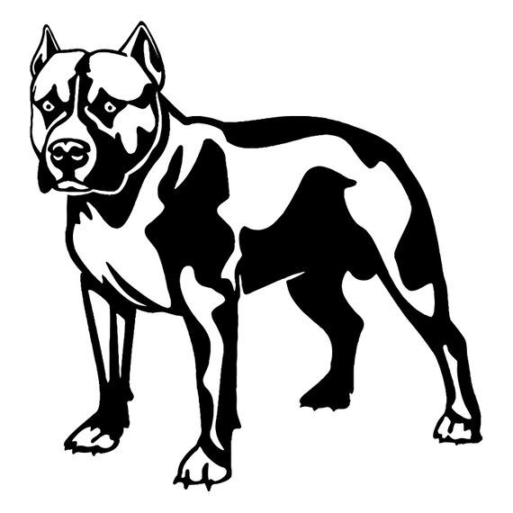 American Pit Bull #4 Pitbull Bully Staffordshire Terrier