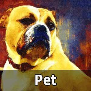 Order Online Pet Portrait Painting Pet Portrait Painting