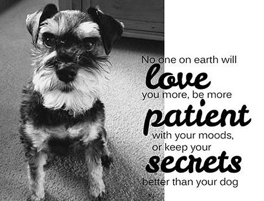 26 Dog Quotes About Love And Compassion Dog Quotes Dog Quotes