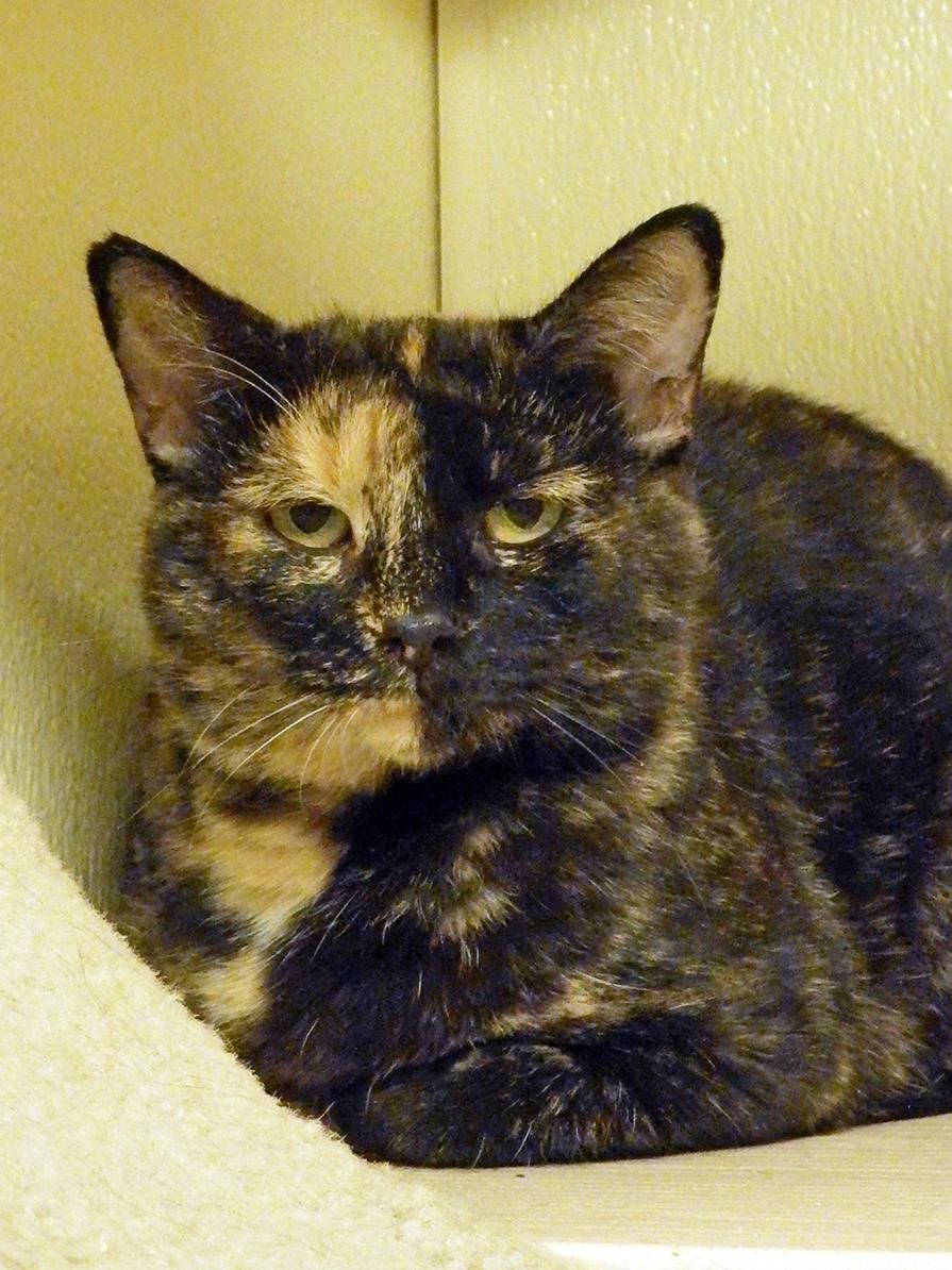 Adopt Jovi On Cute Cats Crazy Cats Crazy Cat Lady