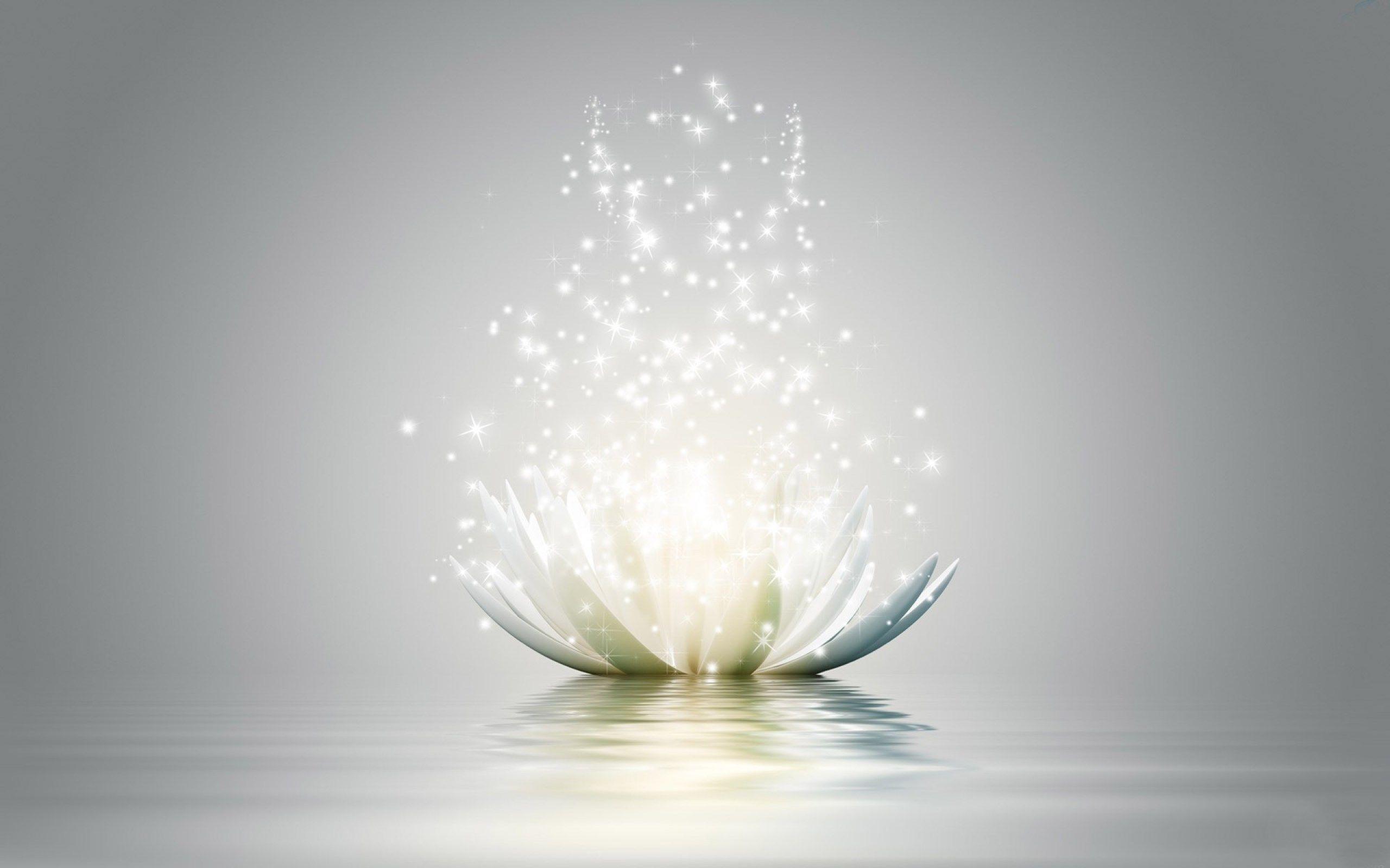 2560x1600 Widescreen Wallpaper Lotus Lotus Flower Wallpaper