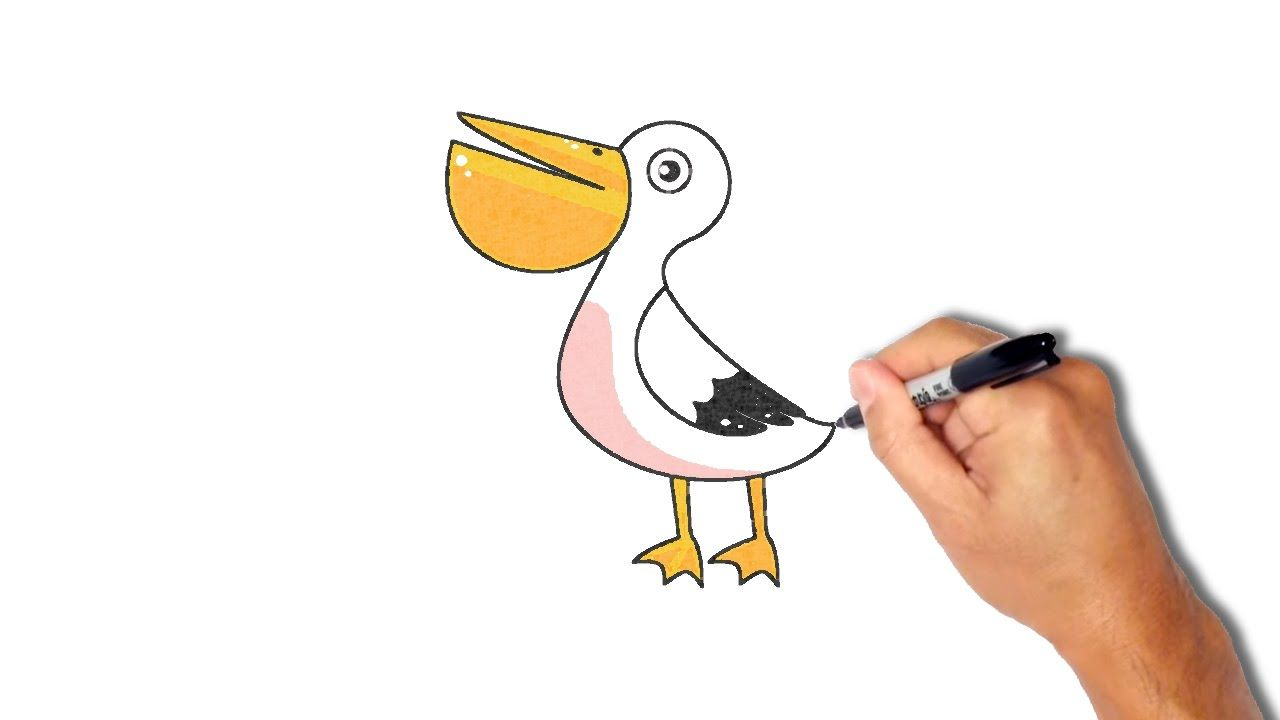 Learning to draw a pelican in stages (coloring) 93