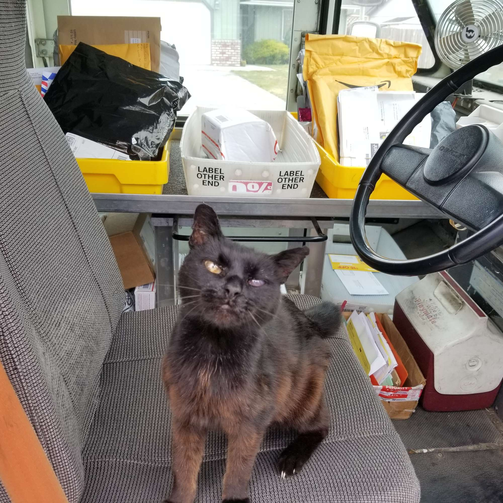 Senior Cat Will Never Let Favorite Mailman Leave Until He Gives Her A Hug Cats Why Do Cats Purr Cat Run