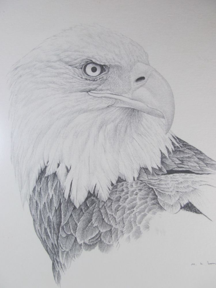 Pencil Drawing of a Bald Eagle Signed By Artist