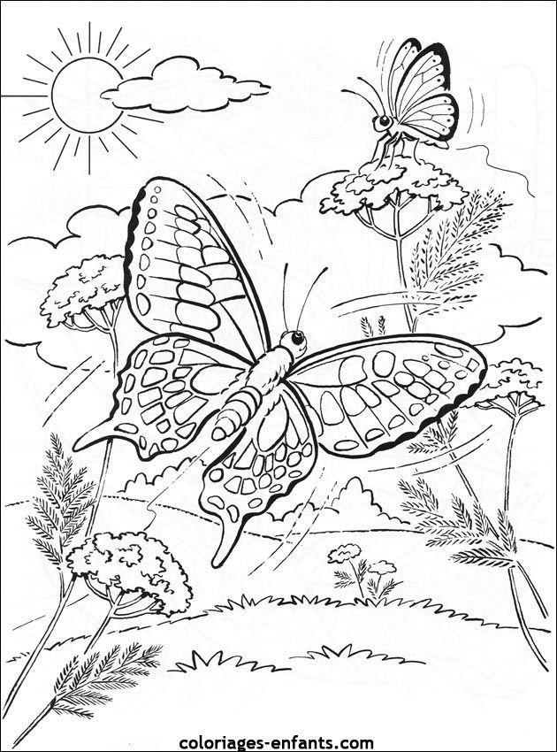 Coloriage de papillons sur coloriages - Papillon coloriage ...
