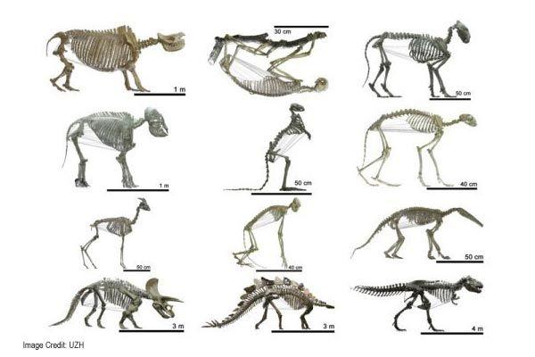 Pin de Science India en PLANTS & ANIMALS | Pinterest