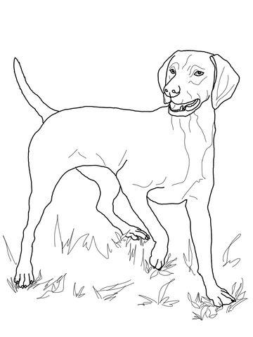 Vizsla Coloring Page Dog Coloring Page Puppy Coloring Pages Dog Coloring Book