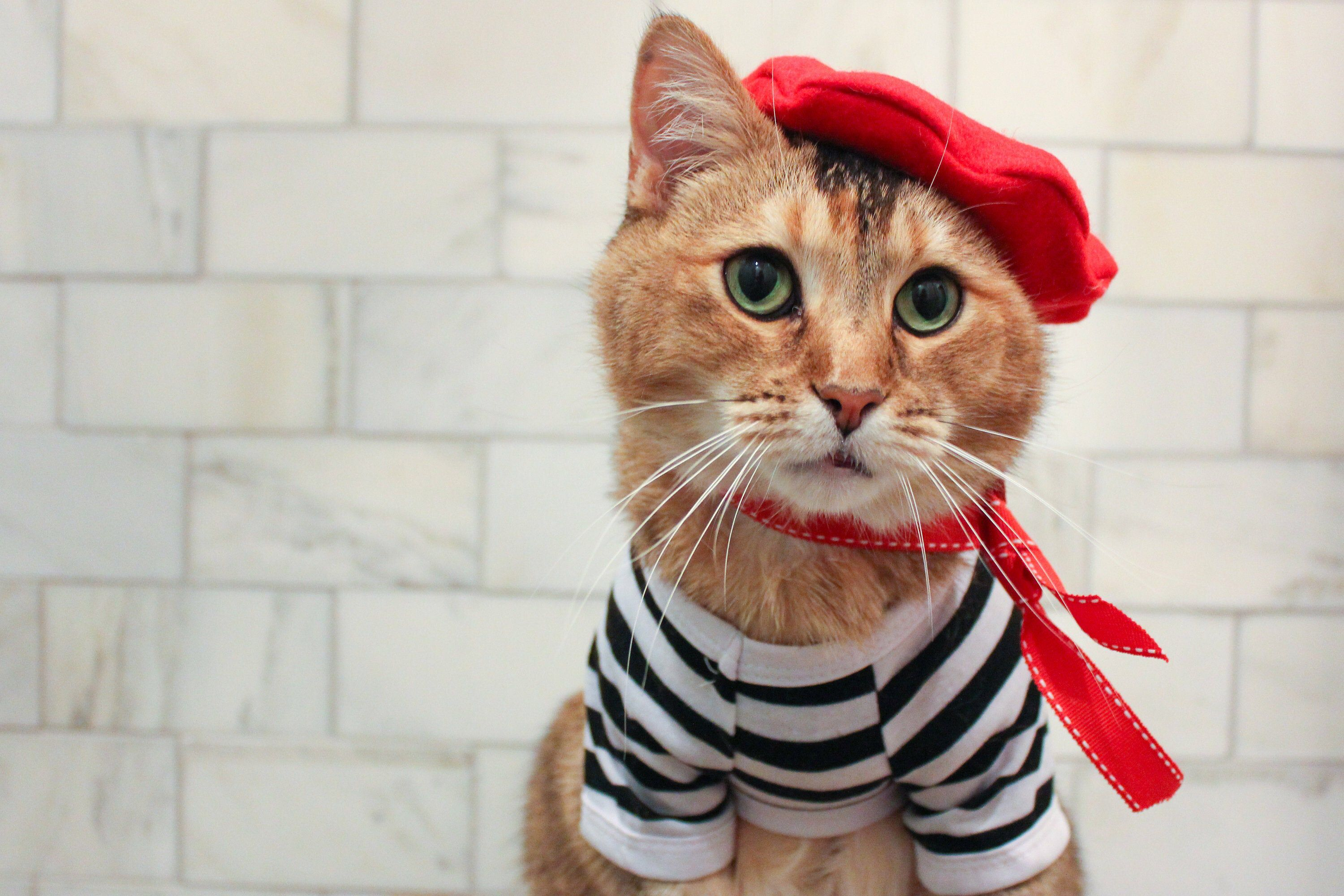 Complete French Cat Outfit Cat Beret Ascot And Striped Shirt Etsy French Cats Cat Clothes Cat Outfits Pets