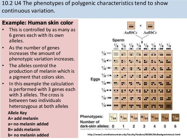 skin color inheritance Biology and