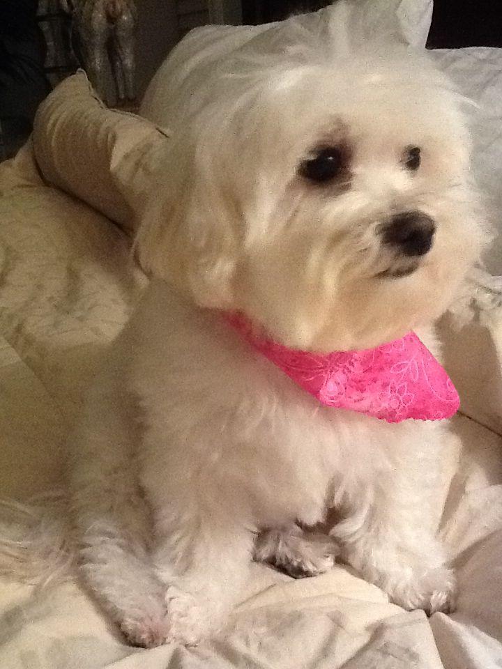 My little rescue, Roxie Pooch, Animals, Maltese