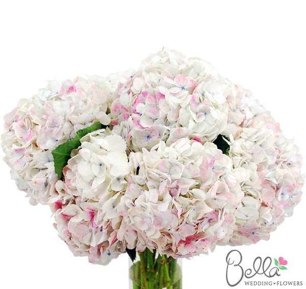 Antique White Hydrangeas White Hydrangea White Wedding Flowers Hydrangea