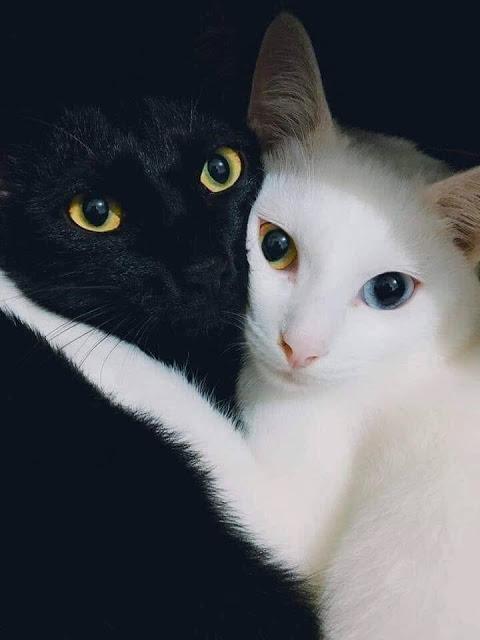 La Mirada Felina Bichobolita In 2020 Katzen