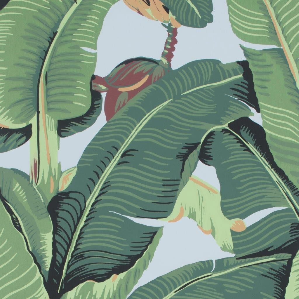 Walnut Wallpaper (With images) Tropical wallpaper, Palm