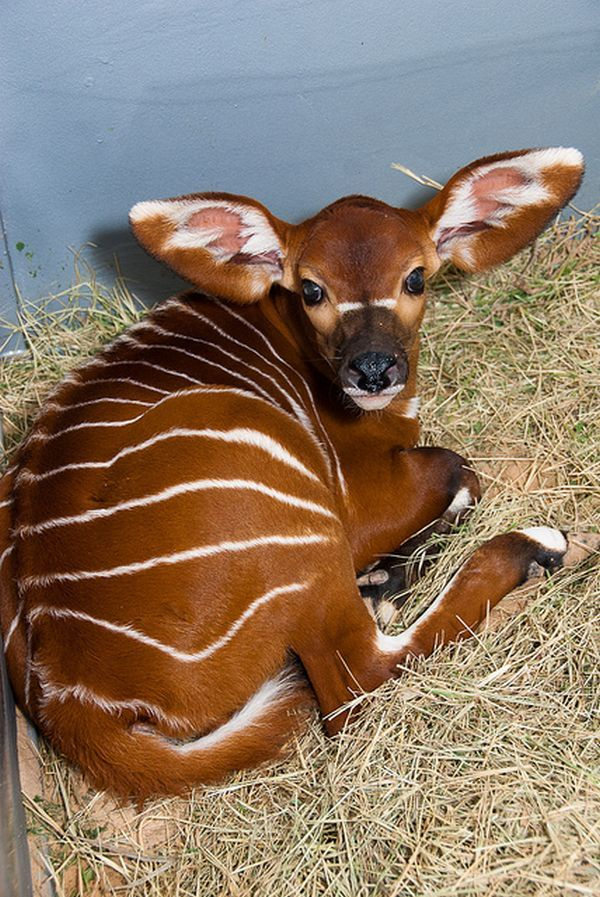 13 Adorable Rare Baby Animals You've Never Seen Before