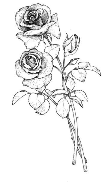 Zdjecie Outline Drawings Flower Drawing Sketches