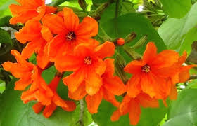 Florida Flower Identification Google Search Flowering Trees Flower Identification Country Garden Landscaping