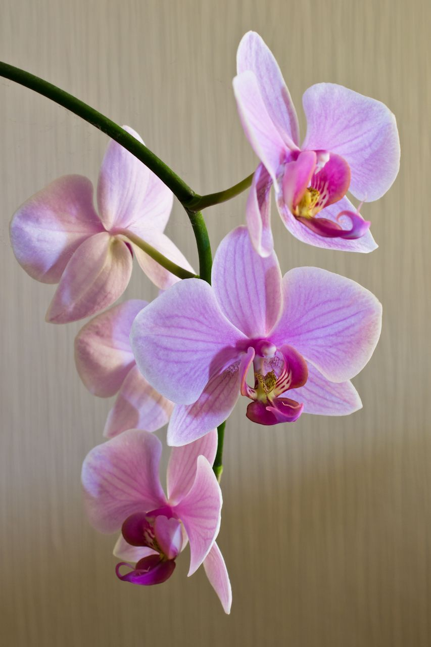 A Thing Of Beauty Orchid Photography Orchids Painting Orchid Flower