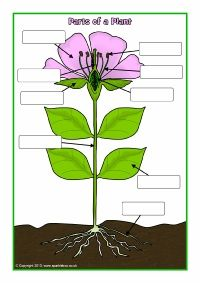 Spelling Worksheets Free Word Parts Of A Plant And Flower Postersworksheets Sb  Teaching Subtraction With Regrouping Worksheets Excel with Worksheets On Sequencing Events Pdf Parts Of A Plant And Flower Postersworksheets Sb  Sparklebox Cell Organelles Review Worksheet Answers