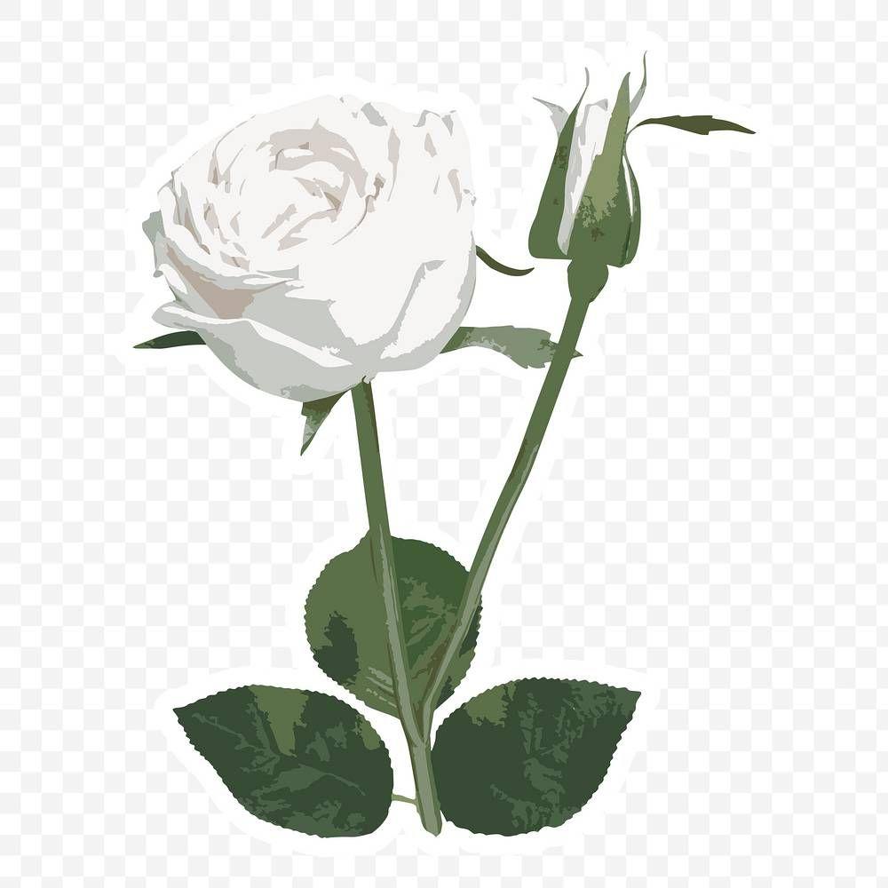 Pink Flowers Wedding Invitation Rose White And Pink Roses Border Template Transparent Backg White Rose Flower Pink Watercolor Flower Rose Flower Arrangements