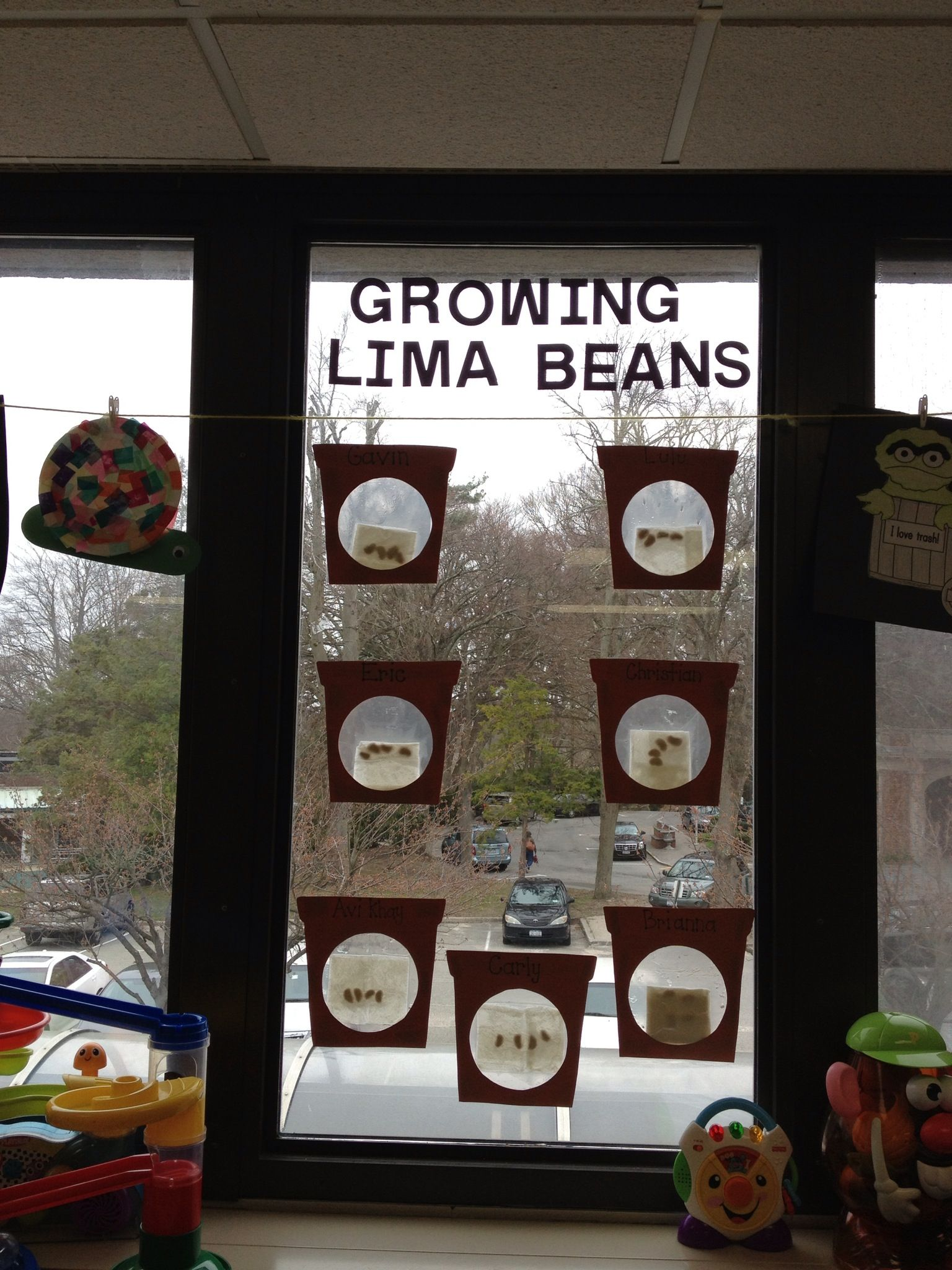 Planted Lima Beans With My Special Needs Preschoolers